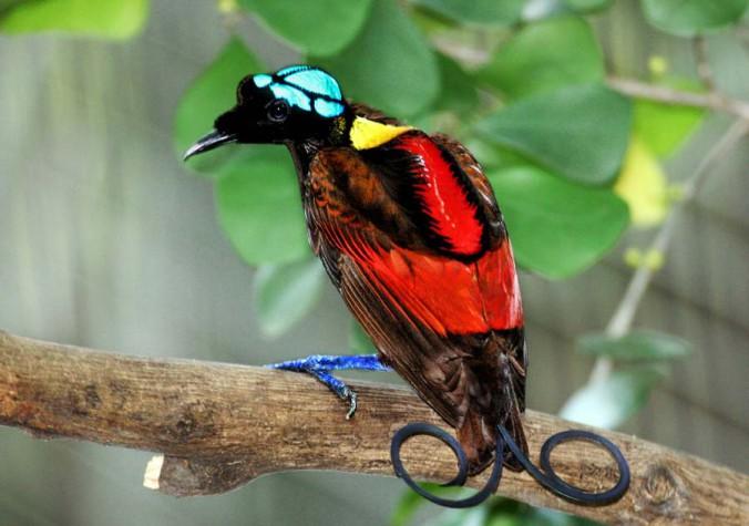 Du trenger ikke å se ut som denne fuglen for å starte meg jogging. Du trenger bare sko, godt humør, og en gratis app.